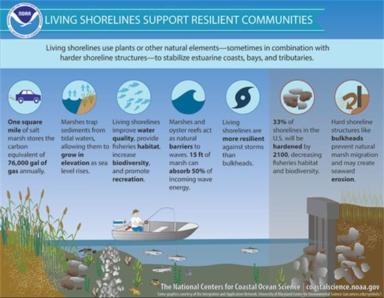 Living Shorelines Support Resilient Communities