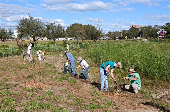 Volunteers plant trees and shrubs at Bruce Beach