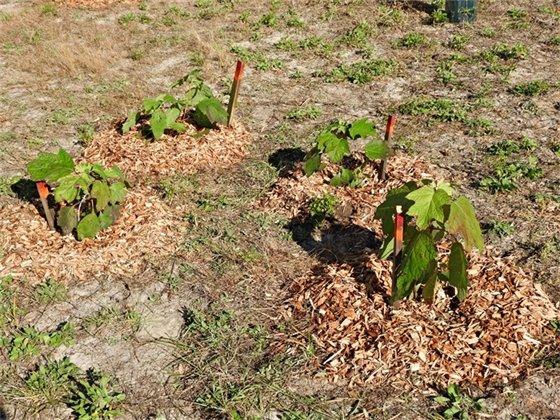 new plants at Bruce Beach