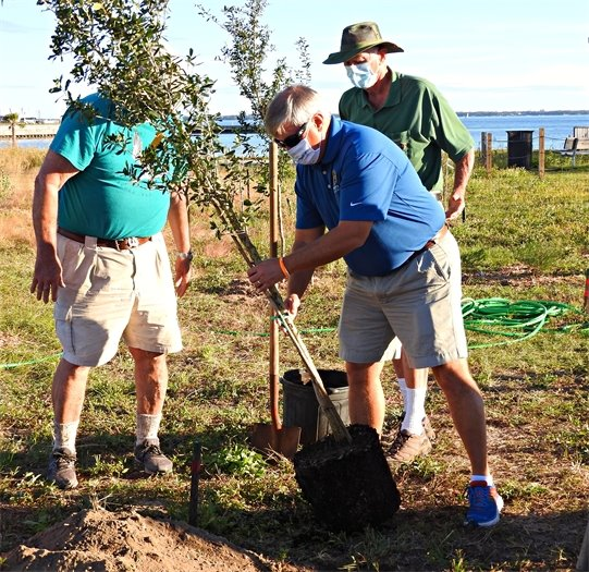 Mayor Grover Robinson plants a tree at Bruce Beach