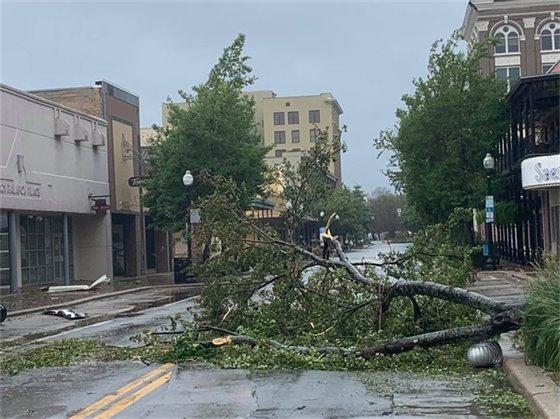 A downed tree on Palafox Street