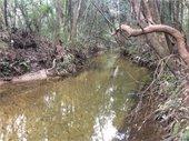 Carpenter Creek