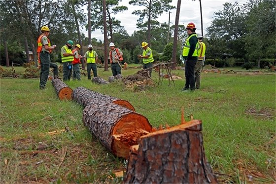 Members of the Urban Forest Strike Team assess tree damage at city and county parks
