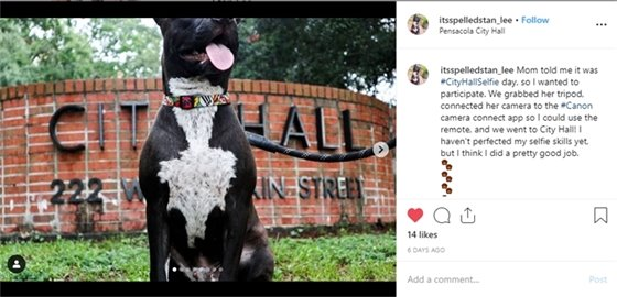 Dog sitting in front of Pensacola City Hall sign