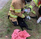 Firefighter rescues black puppy with oxygen mask