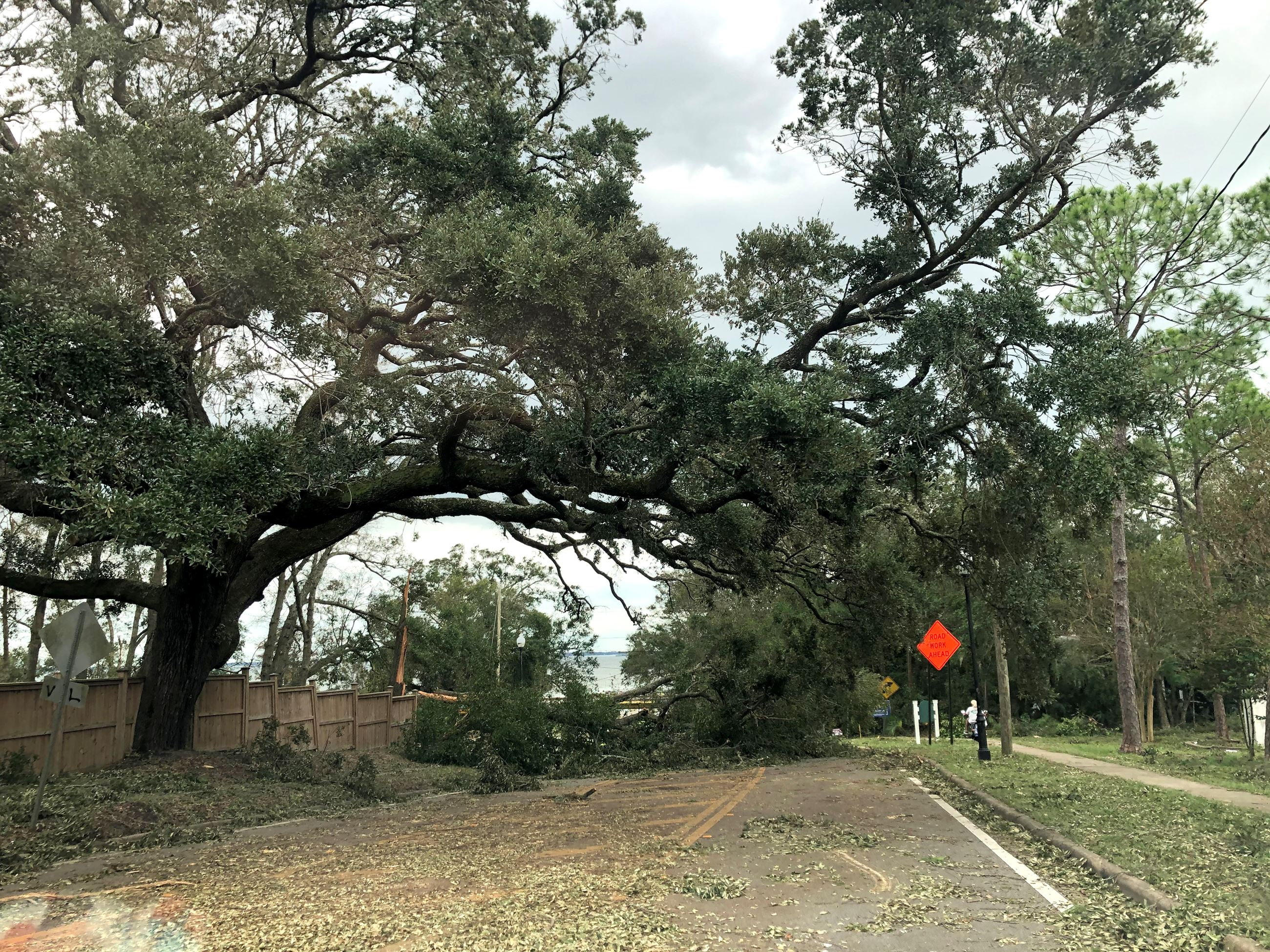 Downed trees in the roadway from hurricane Sally